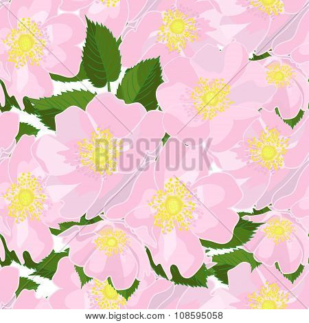 Seamless Floral Dog-rose Background  In Realistic Hand-drawn Style.