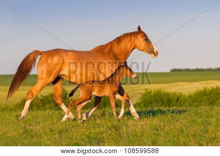 Horse with baby