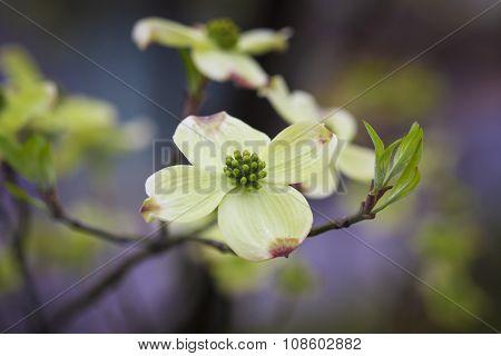 White Flower Spread