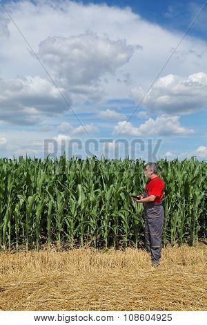 Agriculture, Farmer In Corn Field Examine Quality Using Tablet