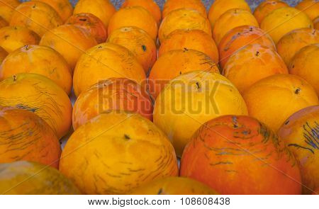 Persimmon. Color image