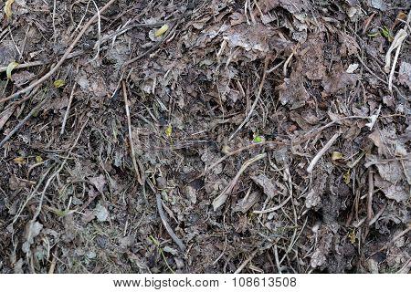 humus foliage texture