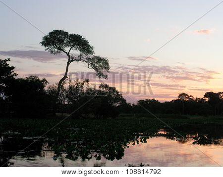 Nightfall in Pantanal, Brazil