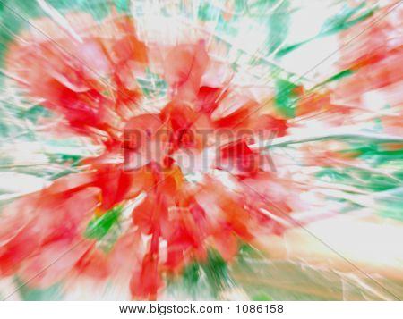 Bouganville Explosion