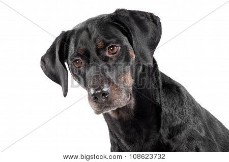 Adorable Black Dog With A Thoughtful Expression