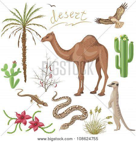 Desert Plants And Animals Set