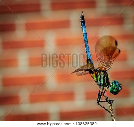 Dragonfly Workout, Doing Pushups