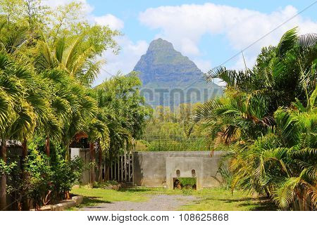 Palm trees against Morne Brabant peak on Mauritius Island.