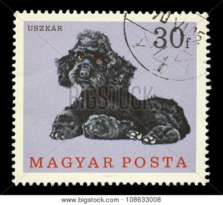 HUNGARY - CIRCA 1975: A stamp printed in Hungary showing dog, circa 1975