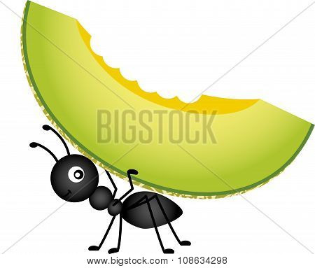 Ant carrying a cantaloupe melon