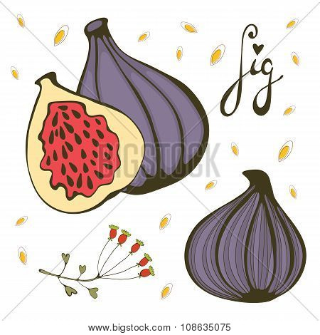 Hand drawn figs