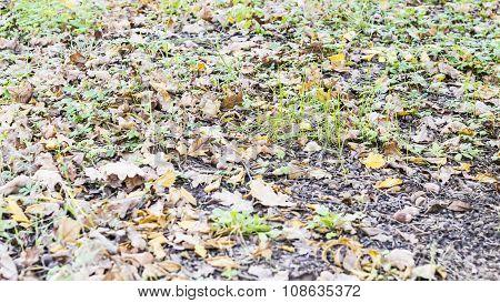 Carpet Of Fry Leaves