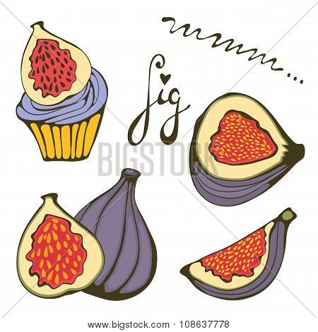 Hand drawn figs and fig cupcake