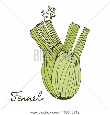 Colorful hand drawn card with fennel