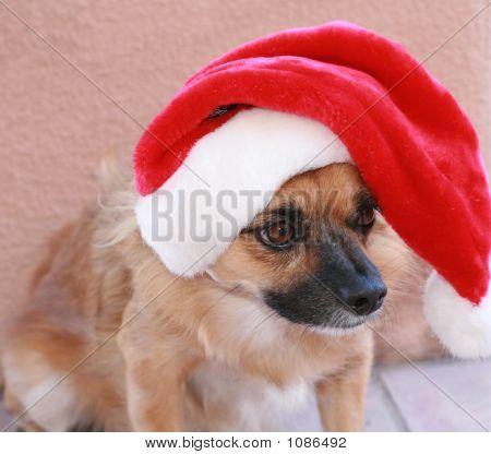 Santa Dog 4