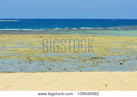 beach and coral reef marsa alam