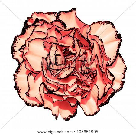 Clove Flower With Red Petals And Black Edging Macro Photography Isolated On White Painting Stylized