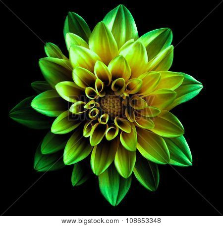 Surreal Dark Chrome Green Flower Dahlia Macro Isolated On Black