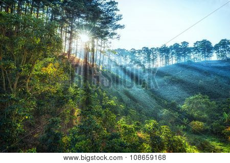 Ray of sunshine early in the pine forest Dalat