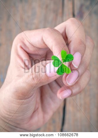 The Girl Holding  Clover Leaf Concept For Love Hope And Goodness On Old Wood.
