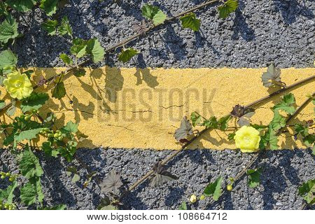 asphalt road with plant