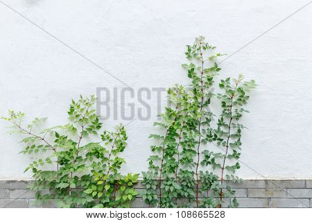 growing green plant against white wall