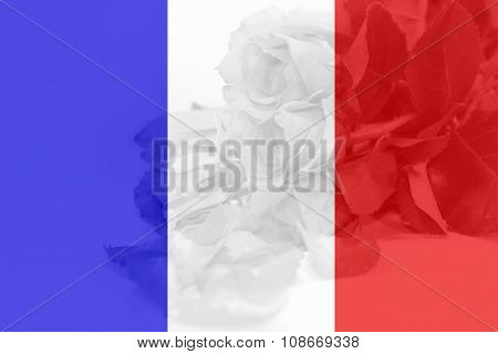 France flag with rose background