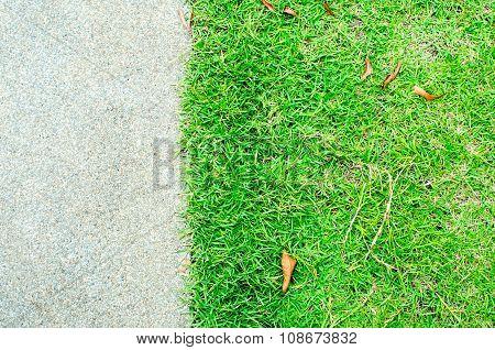 Grass And Small Stone Pavement