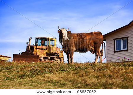 Mountain Landscape With Cow And Tractor In Background.  Blue Sky