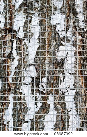 Safety Net On Birch Bark Against Rodents Texture