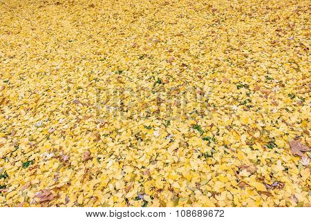 Yellow leaves in Stadpark Vienna, Austria