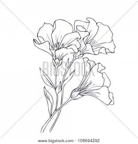 Hand drawn vector with flowers. Floral natural design. Graphic, sketch drawing.