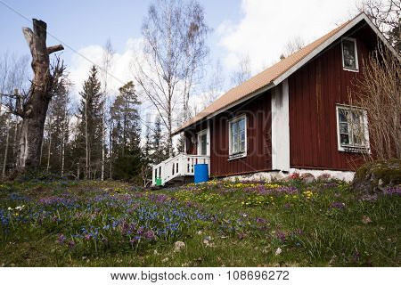 old cottage in spring flowers