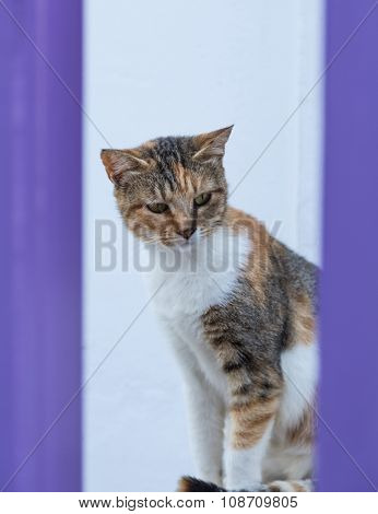 Photo of serious turtle colored cat sitting and looking against of light blue background