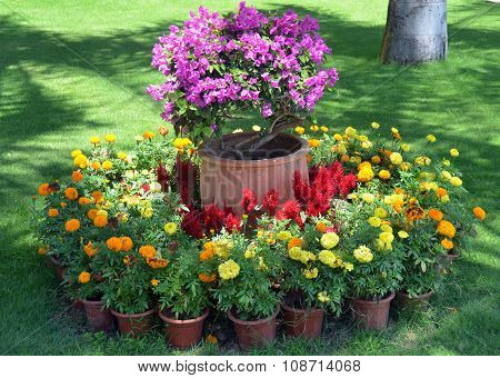A Flower Bed In The Park