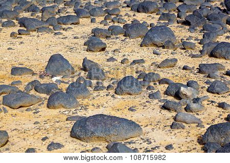 Dry Area With Old Lava Stones  At The Coastline