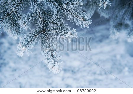 Image Of Snowy Fir Tree Background, Abstract Natural Backdrop, Pine Tree Branch Covered Hoar, Conife
