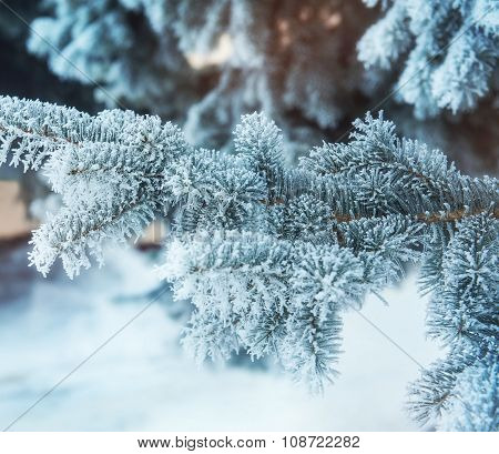 Winter Background With Snow-covered Tree