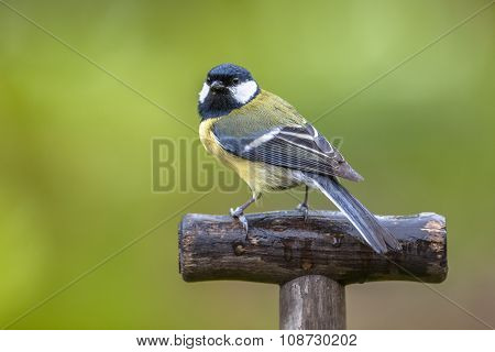 Great Tit Perched On A Shovel