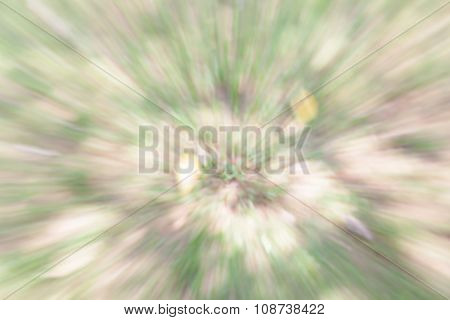 Blurred Bokeh Of Tree Background In Green Forest.