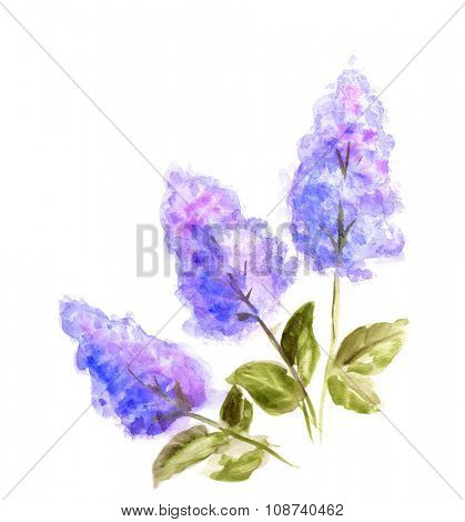 Hand Painted Watercolor Flower Lilac. Wet painting illustration