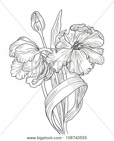 Line ink drawing of tulip flowers. Black contour on white background