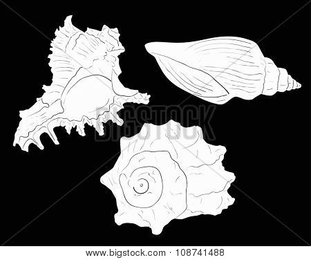 illustration with three white shellfishes sketches isolated on black background