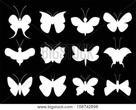 Butterflies black and white flat style vector collection. Vector butterfly set. Butterfly colorful different types. Butterfly silhouette isolated on black background. Butterfly black and white