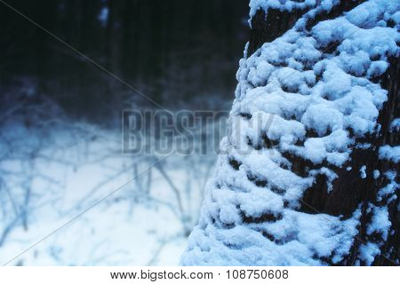 Creepy Winter Landscape