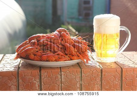 Mug Of Beer And A Dish With Boiled Cancers