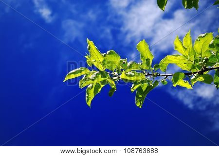Branch and sky.