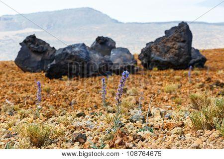 Volcanic bombs on Montana Blanca Teide National Park Tenerife Canary Islands Spain
