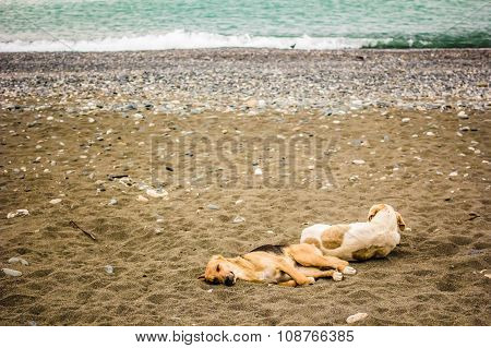Two Spotted Tired Dog Is Resting Lying On A Sandy Beach By The Sea