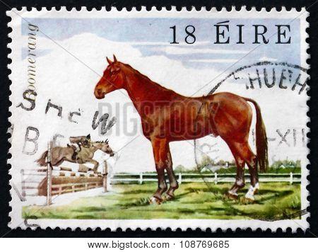 Postage Stamp Ireland 1981 Show-jumper Boomerang, Horse